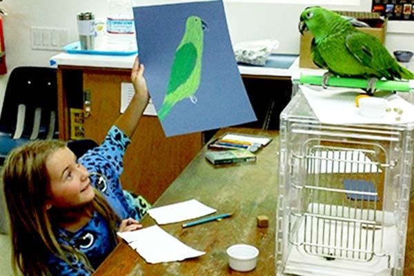 SAC Session I: camper showing instructor Brenda Berg's parrot her nicely observed pastel drawing.